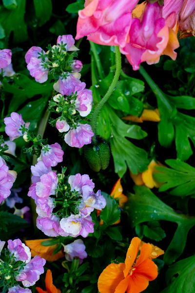 Dewy Flowers, Santana Row, San Jose, California