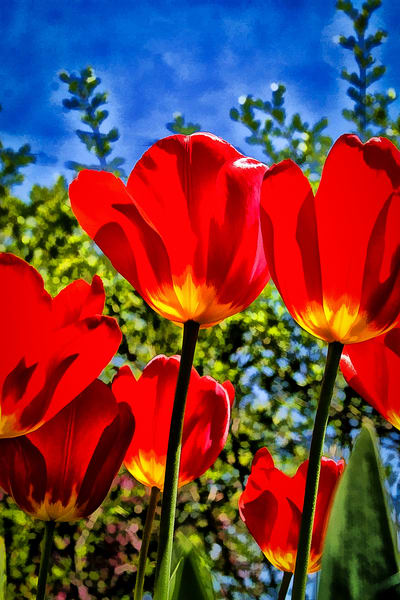 Red Tulips Yellow Accents Art | monroepayne