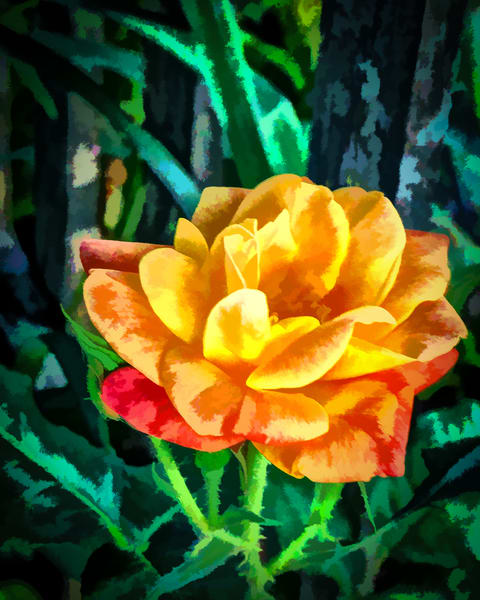 Joseph S Coat Rose Art | monroepayne