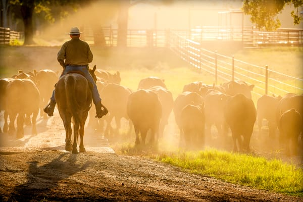 Cowboy On Horseback, Late Afternoon Sun