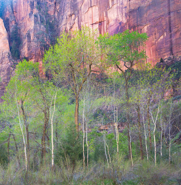 Zion National Park in Springtime by Intimate Landscape photographer Charlotte Gibb