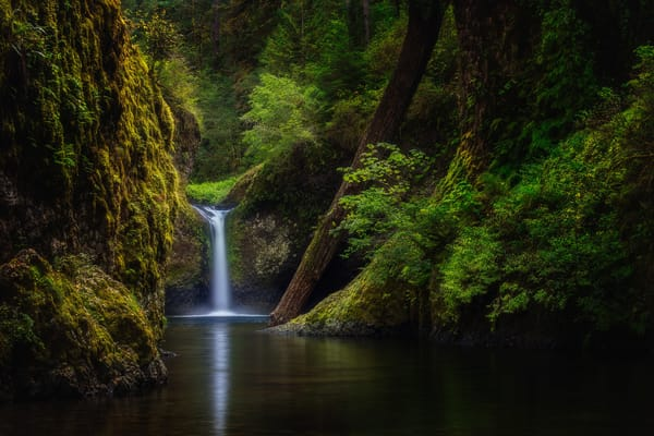 Punchbowl Fall, Columbia Gorge, Oregon by Charlotte Gibb