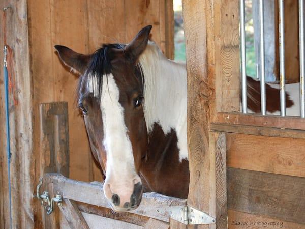 JSalvo-Horse-in-Stall