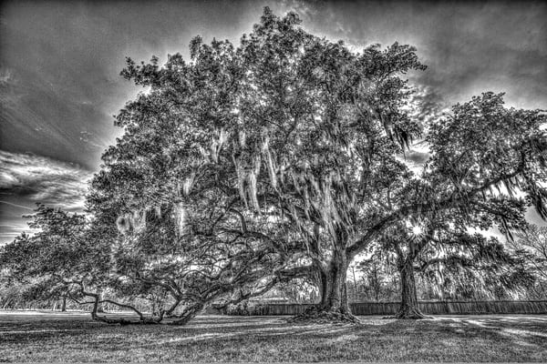 Tree Of Life Bw Photography Art | Zakem Art LLC
