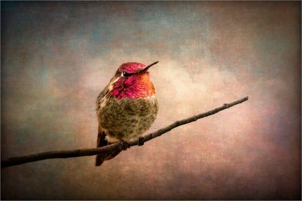 Hummingbird Photography Art | Doug Landreth Photography