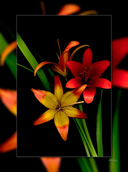 Lilly Red Yellow 3 D Photography Art | Whispering Impressions