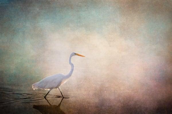 Wading To Wonder Photography Art | Doug Landreth Photography