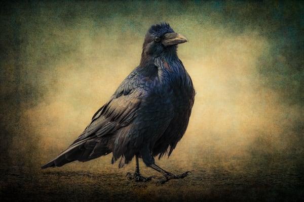Raven Photography Art | Doug Landreth Photography