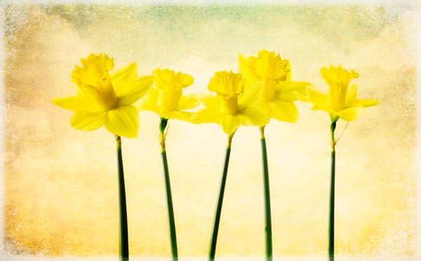 Springtime Arrivals Photography Art | Doug Landreth Photography