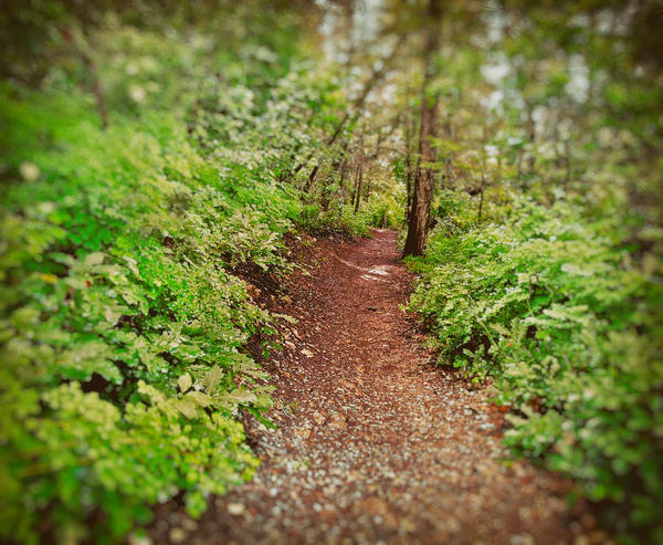 Forest Trail | Nature Art Photography
