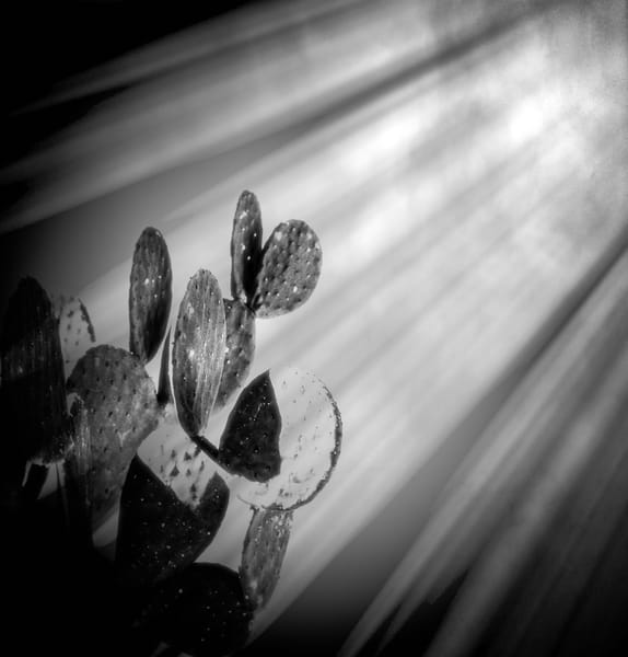 Prickly Pear Sun Rays | Nature Art Photography