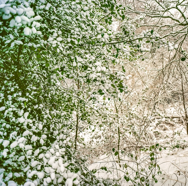 Spring Snow | Nature Art Photography