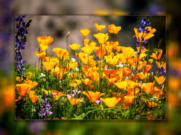 Poppies 3 D Photography Art | Whispering Impressions