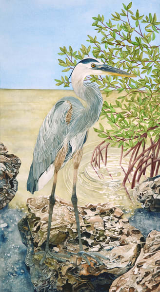A watercolor printed on fine art paper of a Heron in the mangroves.  Watercolor by artist Sandra Galloway. Framing options available