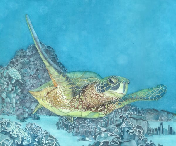 A print by watercolor artist Sandra Galloway.on fine art paper of a sea turtle swimming through tropical waters. Framing options are available
