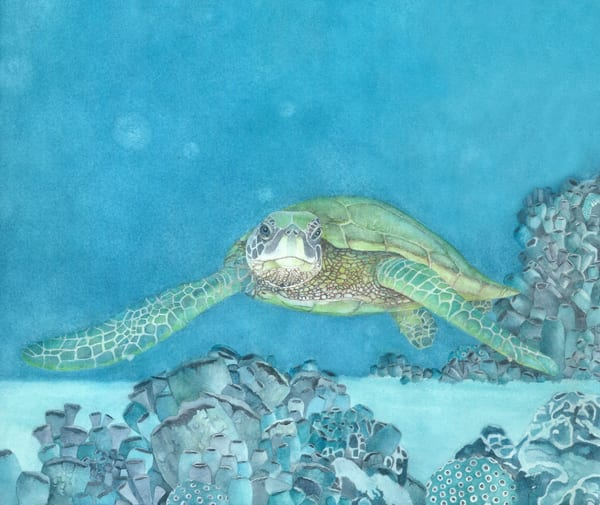 A print on fine art paper of a large sea turtle swimming through coral in calm tropical waters, by watercolor artist Sandra Galloway. Framing options available