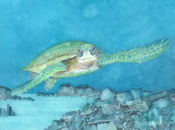 A print on fine art paper of a sea turtle swimming through tropical waters by watercolor artist Sandra Galloway. Framing options are available