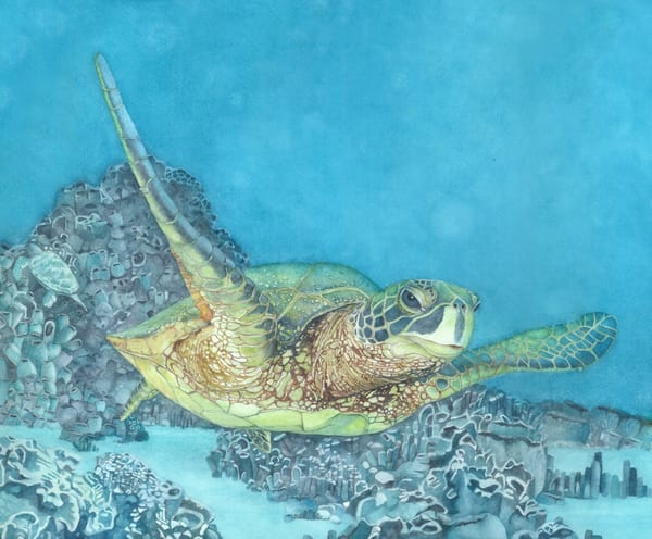 A print by watercolor artist Sandra Galloway.on gallery-wrapped canvas of a sea turtle swimming through tropical waters
