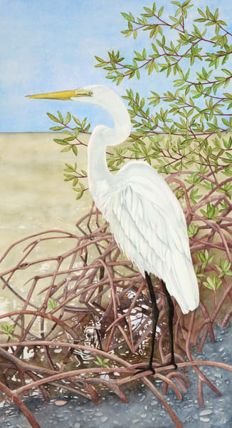 A detailed watercolor by artist Sandra Galloway of an Egret in the mangroves.  Printed on stretched canvas - framing options are available