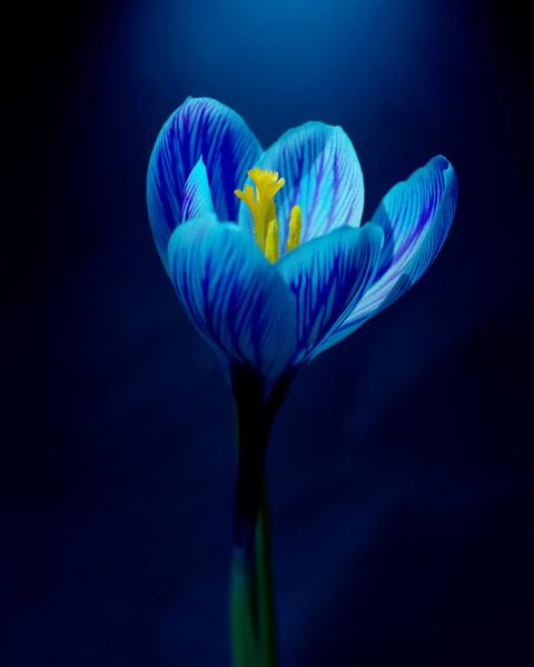 Botanical 27 Photography Art | MPF Gallery