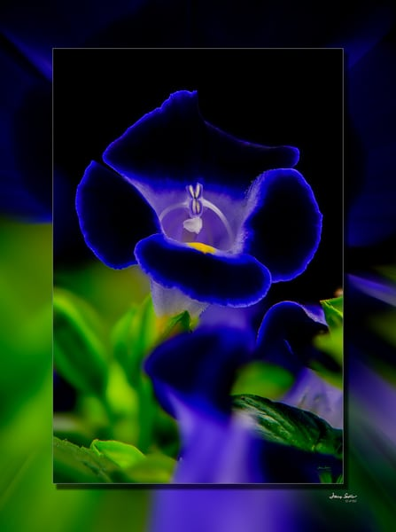 Tornia 3 D Photography Art | Whispering Impressions