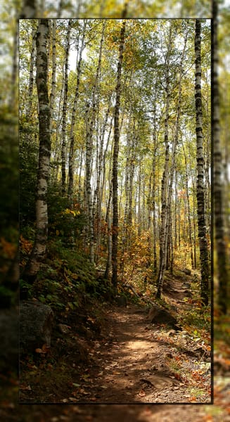 Walk In The Woods V 3 D Photography Art | Whispering Impressions