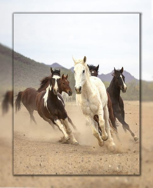 White Horse Run  V 3 D Photography Art | Whispering Impressions