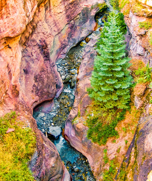 Clinging Pine Tree | Mountain Landscape Photography Print