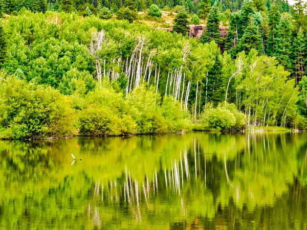Nature Photo Prints | Online Art Photography Store