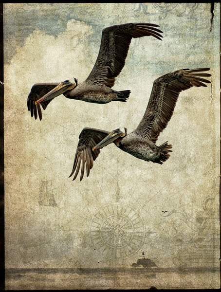 Pelicans in flight against a nautical background