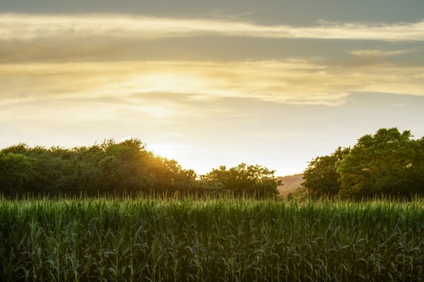Cornfield Splendor Photography Art | davinart