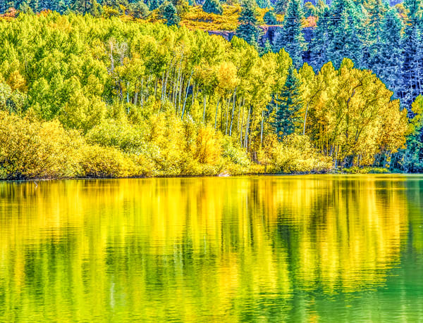 Golden Aspen Reflections | Nature Art Photography