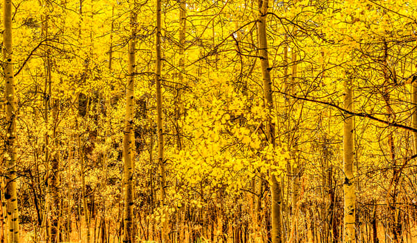 Autumn Gold | Nature Art Photography