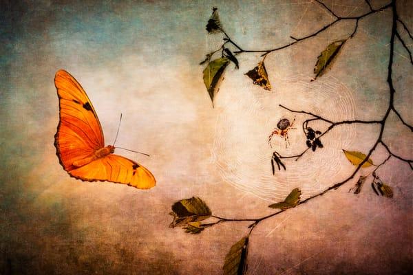 A butterfly flies through a beautiful background toward a hidden spiderweb.
