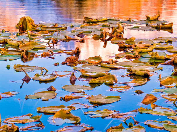 Floating Autumn Leaves | Nature Art Photography