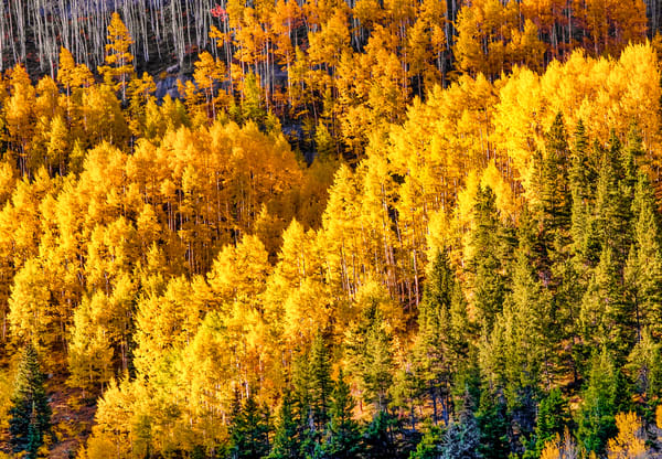 Colorado Autumn Color | Mountain Landscape Photography Print