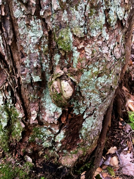 Stuck in a tree - Crystal Lake - Debra Cortese