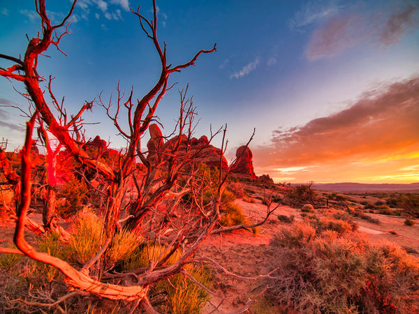 Desert Red | Desert Landscape Fine Art Photography