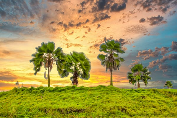 Caribbean Palms | Tropical Landscape Photography Print
