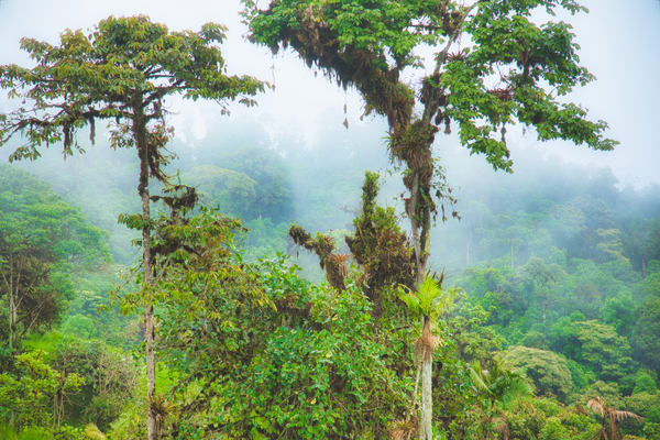 Andes Tropical Trees | Tropical Landscape Photography Print