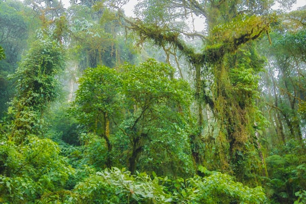 Lush Andes Mountain Jungle | Tropical Landscape Photography Print