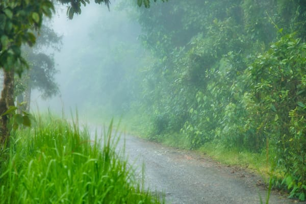 Andes Foggy Road | Tropical Landscape Photography Print