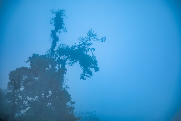 Andes Leaning Tree | Nature Art Photography