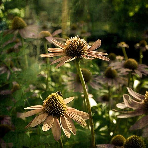 Summer photoart 10x10  200 lciafa d7auqn