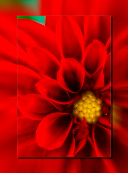 Dahlia Red Closeup 3 D Photography Art | Whispering Impressions