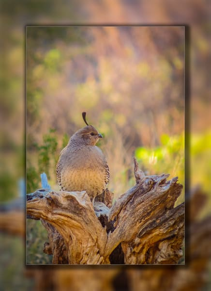 Quail   Female Stump 3 D Photography Art | Whispering Impressions