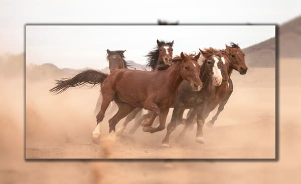 Running Wild Pano 3 D Photography Art   Whispering Impressions