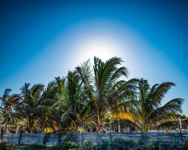 Palms in the Sun - Art Print