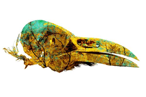 Raven Skull, by Laura Grisamore