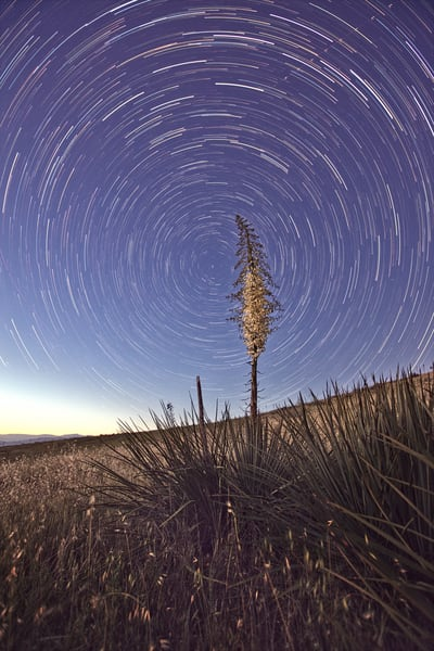 Star Trails Over Yucca Blossom Art | Chad Wanstreet Inc